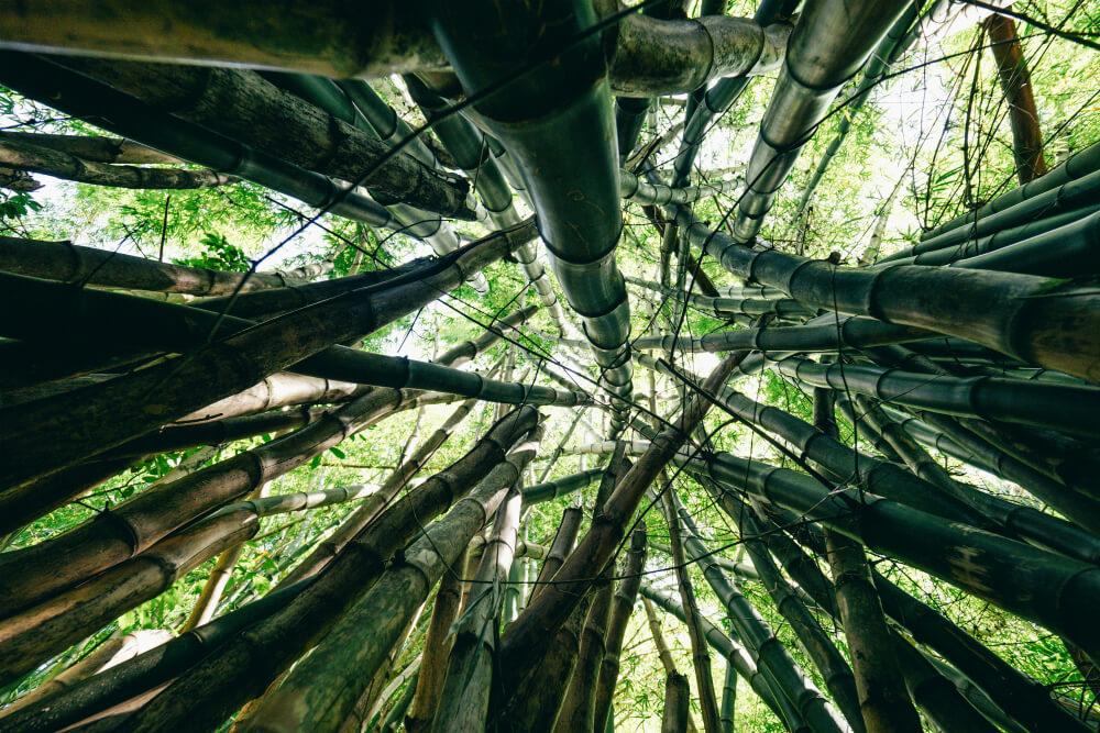 Signal sustainable bamboe kleding duurzaam bamboo fabric